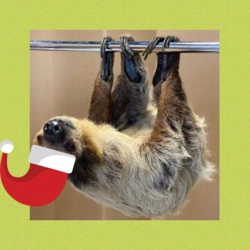 Holiday Family Fun - Santa, Sloth, and more December Event - Tickets will sell out